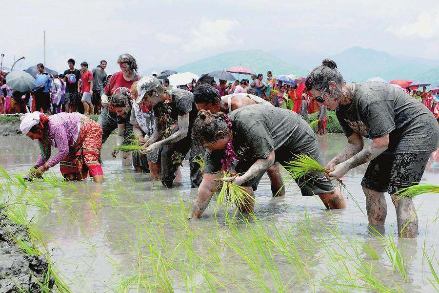 VITOF Nepal organizes Rice Planting Festival
