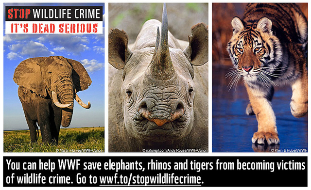 Stop-Wildlife-Crime WWF