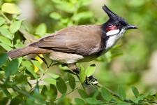 150 species of birds under threat